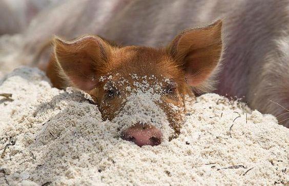 lui in het zand