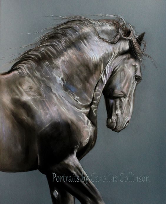 """The Colours of Tunis"" (Friesian Stallion) Portraits by Caroline Collinson"