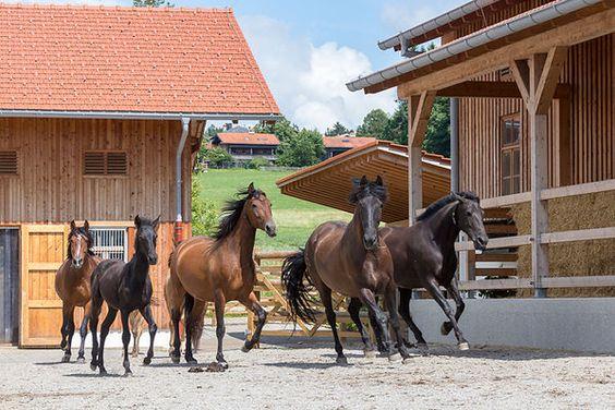 Bewegung – am besten gemeinsam mit guten Freunden – hält Pferde physisch und psychisch gesund. Um sie aber auf Trab zu bringen, bedarf es einiger Anreize. © www.slawik.com