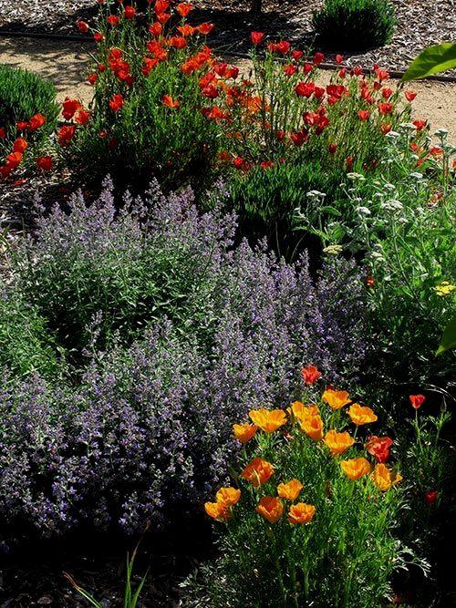 dc9e800f0d3a3adcccf46e94d65f56cf - Care And Maintenance Of Southern California Native Plant Gardens
