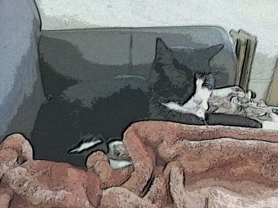 "Taken on the App ""Paper Camera"". I really like this sketch-like format"