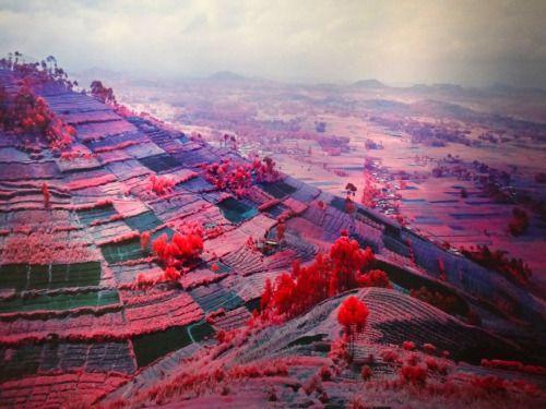 Stunning Pink Landscapes Of Congo Richard Mosse A Beautifully Calm And Vast Pink Landscape Carries An Equally Larg Richard Mosse Fine Art Landscape Landscape