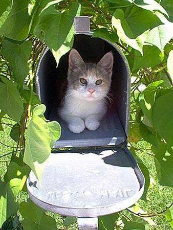 Que peut bien faire ce chat dans une boîte aux lettres ? - oasisdepaix