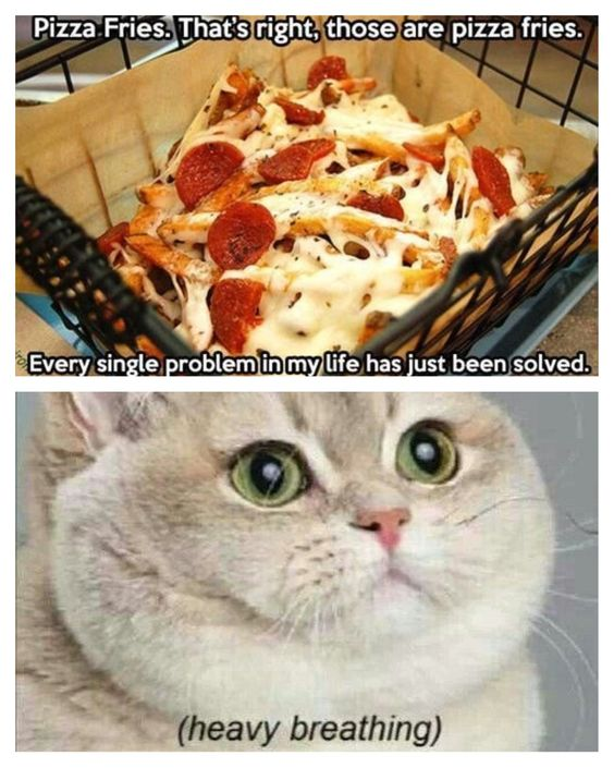 Pizza fries. Heavy breathing cat | Funny!!! | Pinterest ...Funny Fat Cat Breathing