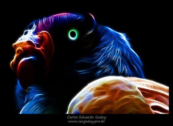 Foto de um urubu-rei transformada digitalmente. Veja mais em www.facebook.com/cecgodoyphotos