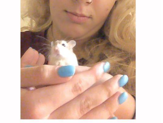 Spirit Hamster Hamster Spirit Airlines Emotional Support Animal