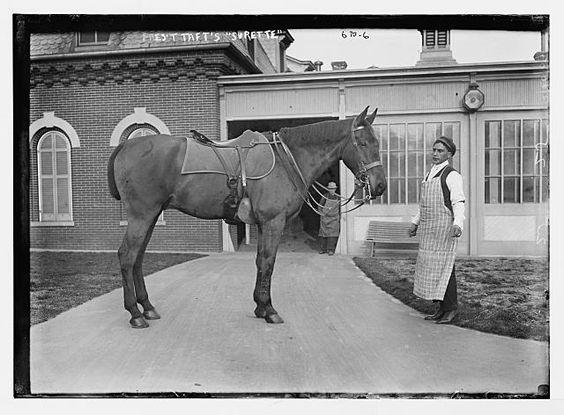"""President Taft's horse - """"Surette"""""""