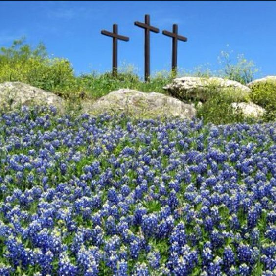 crosses on a hill of bluebonnets
