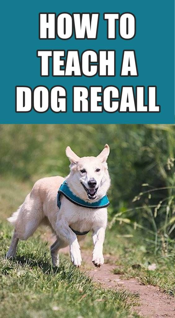 Wondering How Recall Training Is Difficult For Dog Owners It Can
