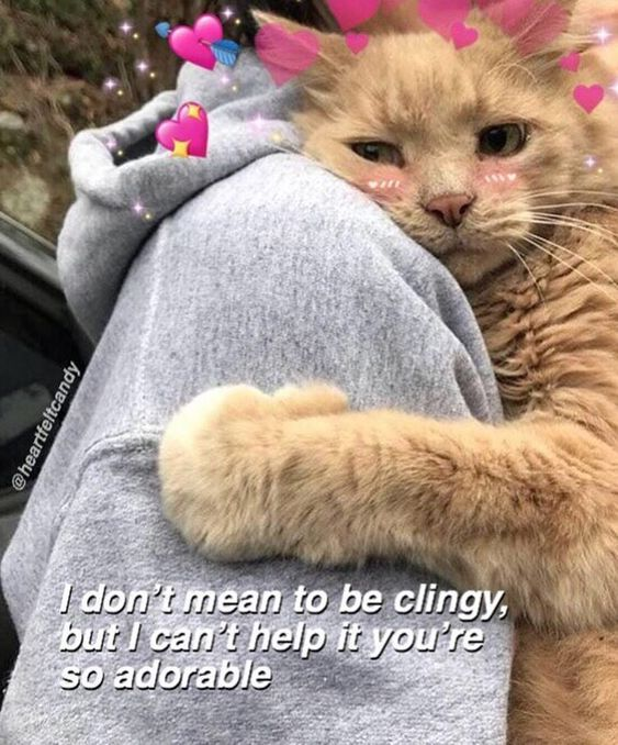 Pin By Daisy Tenenbaum On Them Cute Cat Memes Cute Love Memes Cute Couple Memes