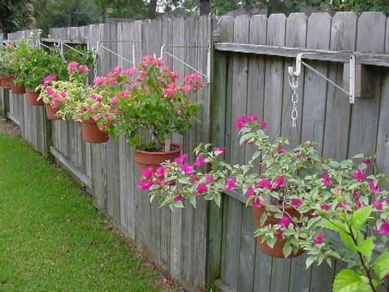Landscaping along fence line one way to display bougainvillea is in hanging pots along a fence - Garden ideas along fence line ...