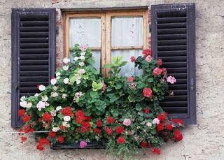 O Jardim: Jardins suspensos-Flores na janela