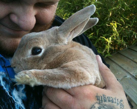 How cute is #vegan arm wrestler 'Big Bald Mike' with his bunny? #cute #bunny #aww