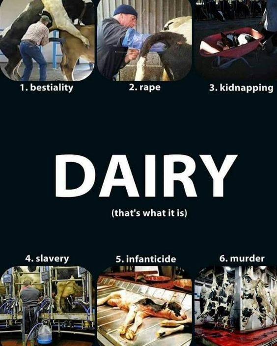 Let's start seeing dairy products for what they are... - #Ditchdairy #BeVegan