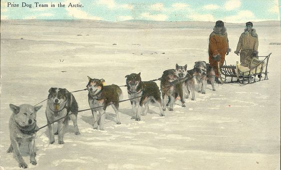 Mail contractors pose with their sled dog team in this postcard image from 1911. Dog sleds transported mail in some areas of the northern U.S. and Alaskan Territory during winter months.