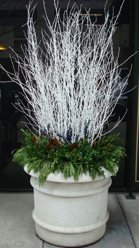 Winter/Holiday Container Display. White branches and green holiday leaves.: