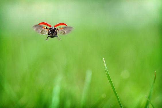 Ladybug by Jeff Horner/ Walla Walla Union-Bulletin, union-bulletin.com #Ladybug #Jeff_Horner #union_bulletin