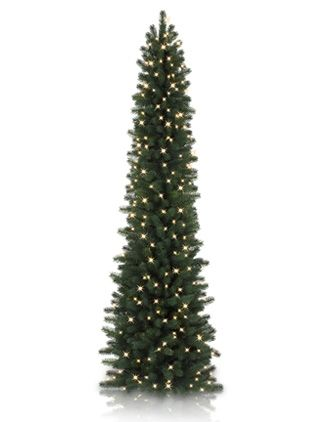 Looking for a super skinny tree