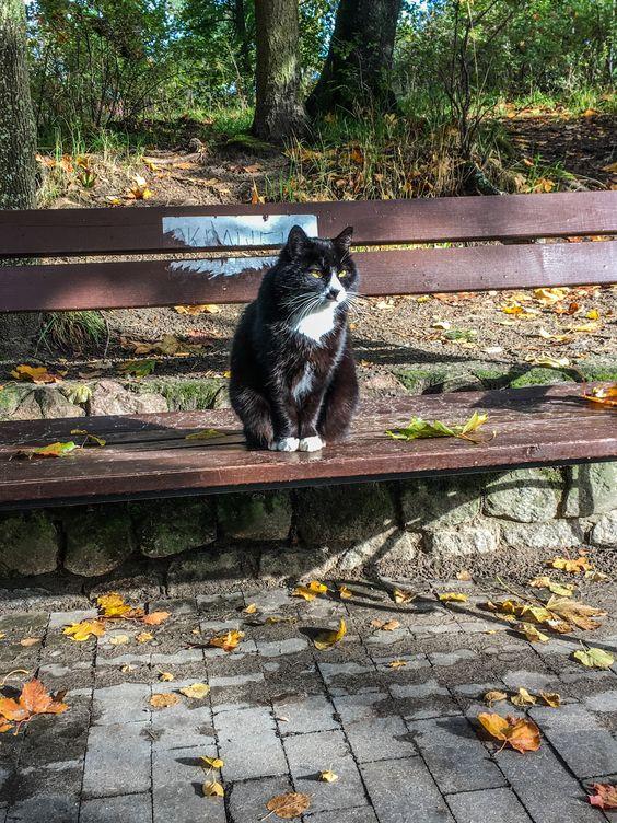 Курортный котик с раннего утра на посту. Фото Жени Шведы