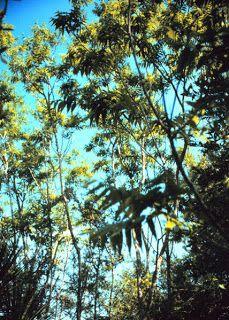 Exeterra: How To: Grow Soap Nut Trees