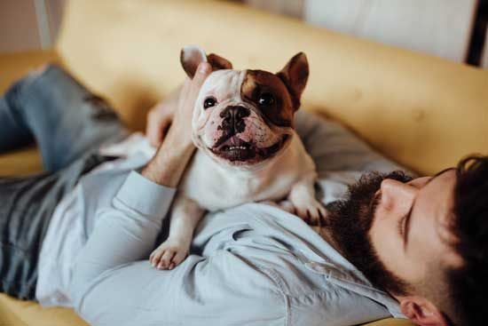 Bone Up On Holistic Pet Care Pet Care Worms In Dogs French Bulldog