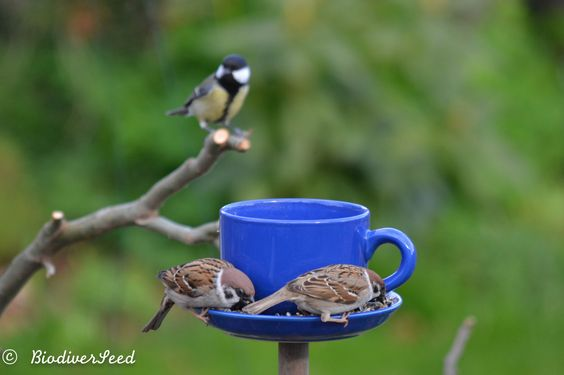 Bird feeder & bird bath