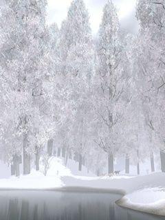 Winter White Nature