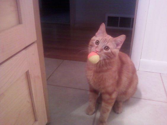 Marshall loves his ball!