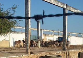 """""""O GRITO DO BICHO"""": ONG denuncia que jumentos retirados das ruas estão..."""