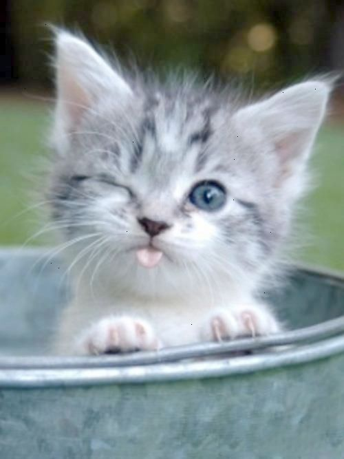 Check This Out Kittens For Sale Near Me For Free Get Kittens