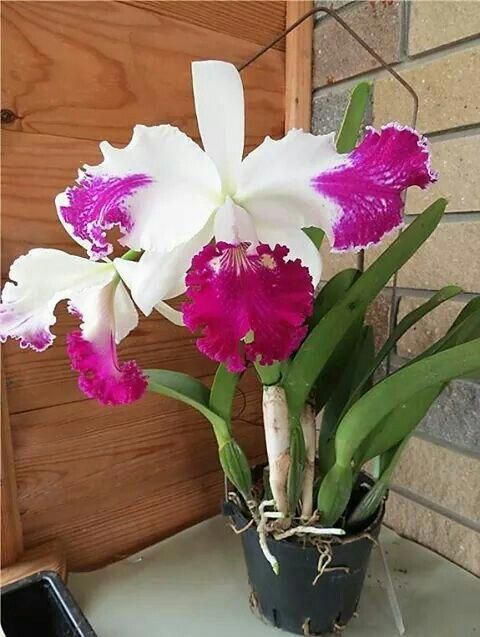 Orchids Asda Orchids Beautiful Orchids Orchid Flower Arrangements Orchid Flower