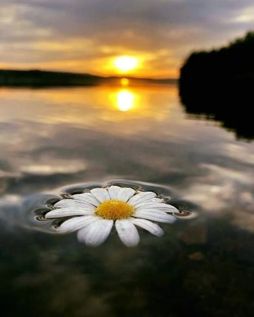 Infinita belleza, flores