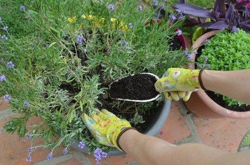 Gloved Hands Adding A Scoopful Of Fertilizer To A Potted Plant Uses For Coffee Grounds Coffee Grounds Garden