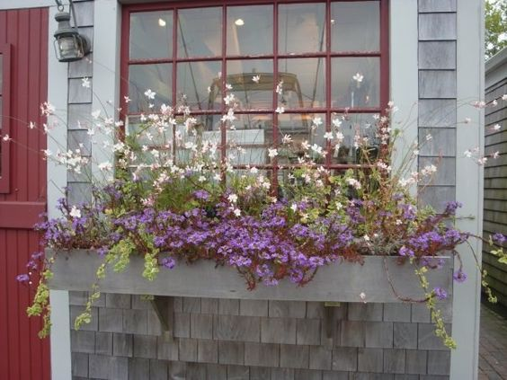 I  Nantucket flower boxes!: Boxes Flowers, Windows Boxes, Nantucket Flower, Boxes Mac44107, Flower Boxes, Boxes Herbaceous, Blocking Window, Window Boxes