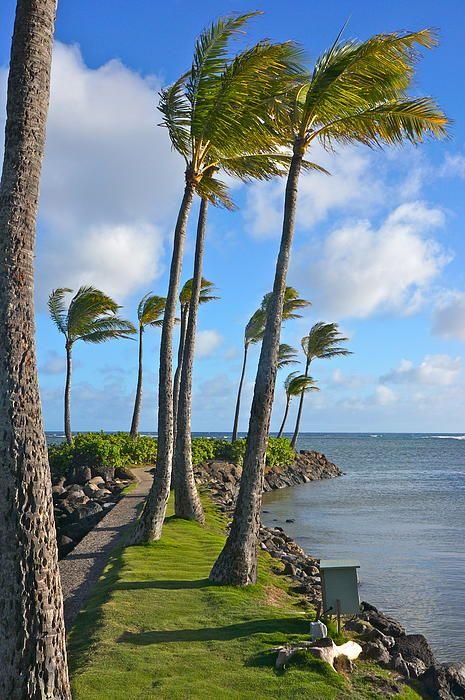 Breezy Palms, Honolulu, Oahu, Hawaii
