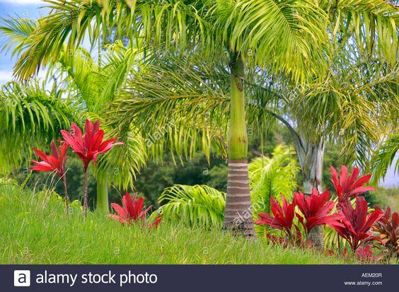 tropical-plants-and-palm-tree-garden-of-eden-botanical-gardens-maui-AEM20R.jpg (1300×954)