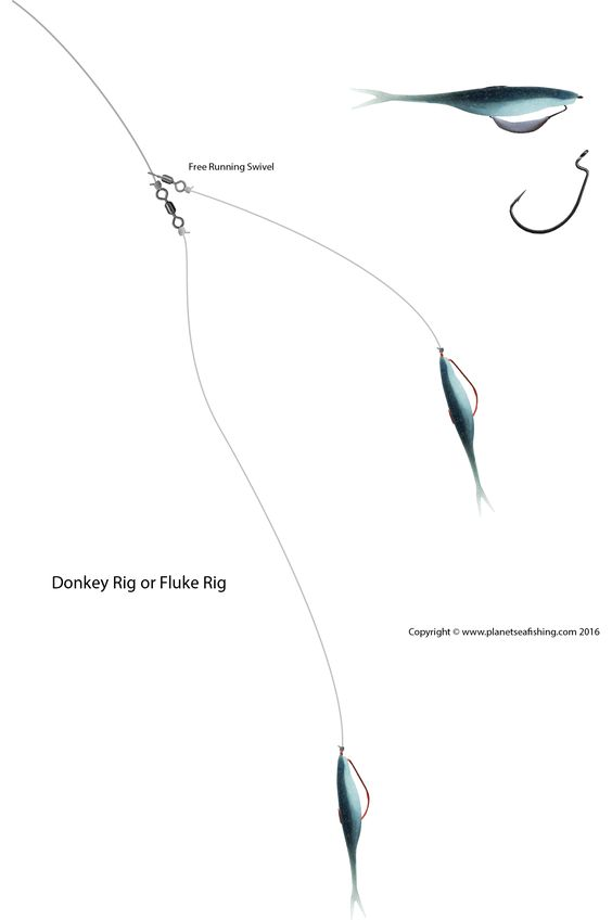 Planet sea fishing rigs donkey rig or double fluke rig for Fluke bass fishing