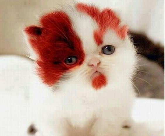 Redheaded cat: Kitty Cats, Cute Cats, Crazy Cat, Baby Animals, Furry Friends, Cat Lady, Adorable Animal