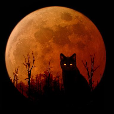 cat and a harvest moon