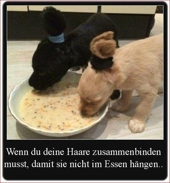 Lustige Welpen Lustige Hund Meme Lustige Bilder Von Tieren
