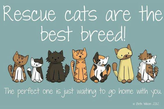 Adopt don't shop! Plenty of cats and dogs are euthanized every day. We caused the problem and We need to fix it. #adoptdontshop#spayandneuter#savethemall #resuesaveslives