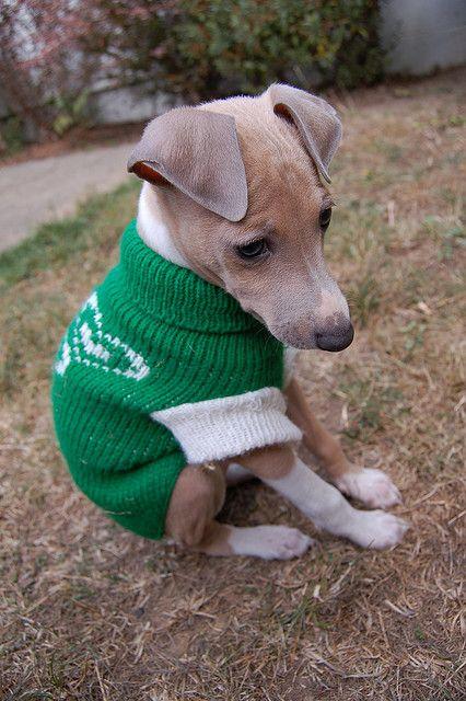 Cash, as a puppy