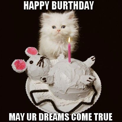 Image result for happy birthday cat images funny
