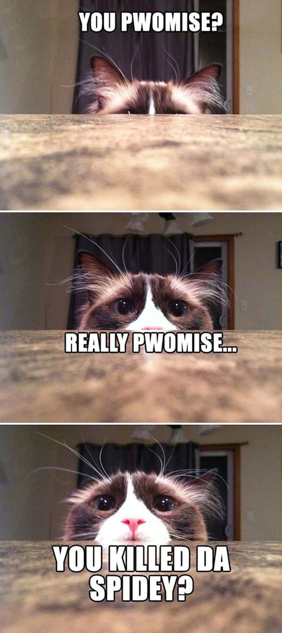 Funny Pictures Of Animals | Fun Claw: Funny Pictures Of Cats - 19 Pics this is me: