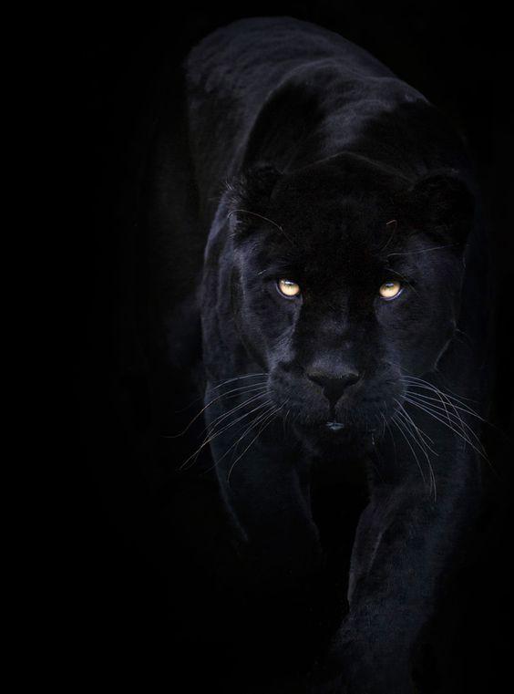 tout noir: