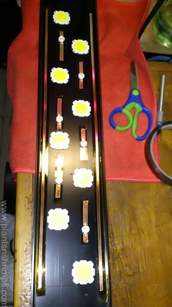Dsc 1298 Filtered Led Tipos De Plantas