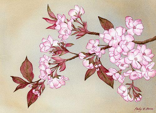 "sakura blossom - ""Google"" paieška"
