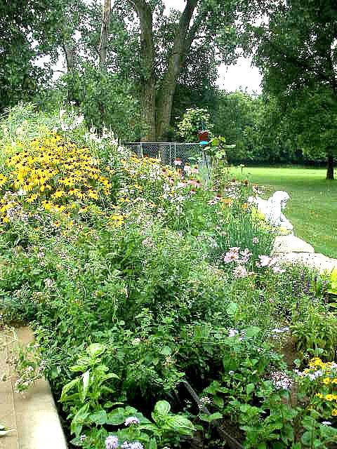 This is my garden! It is a mix of herbs and flowers that attract bees , hummingbirds and butterflies.