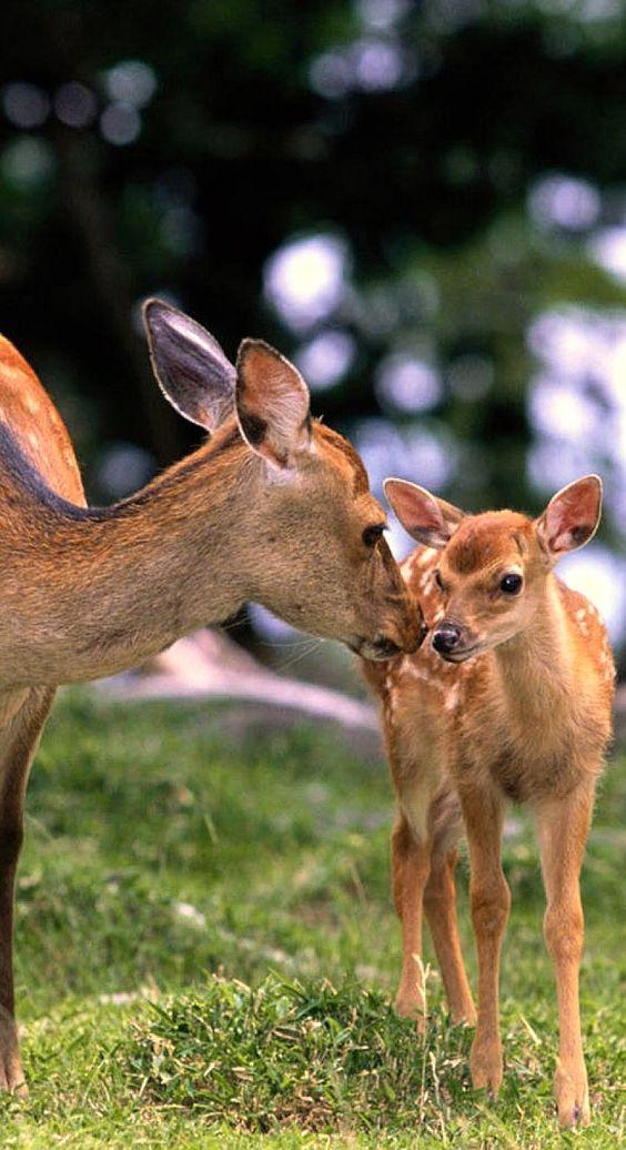 sweet deer....