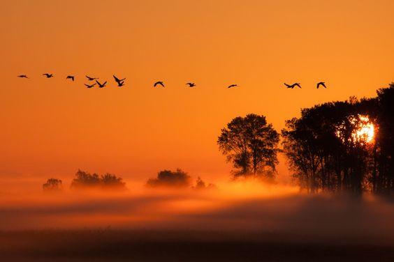 Morgens am Darss II by stefanvoelkel: Sonnenaufgang am Darss